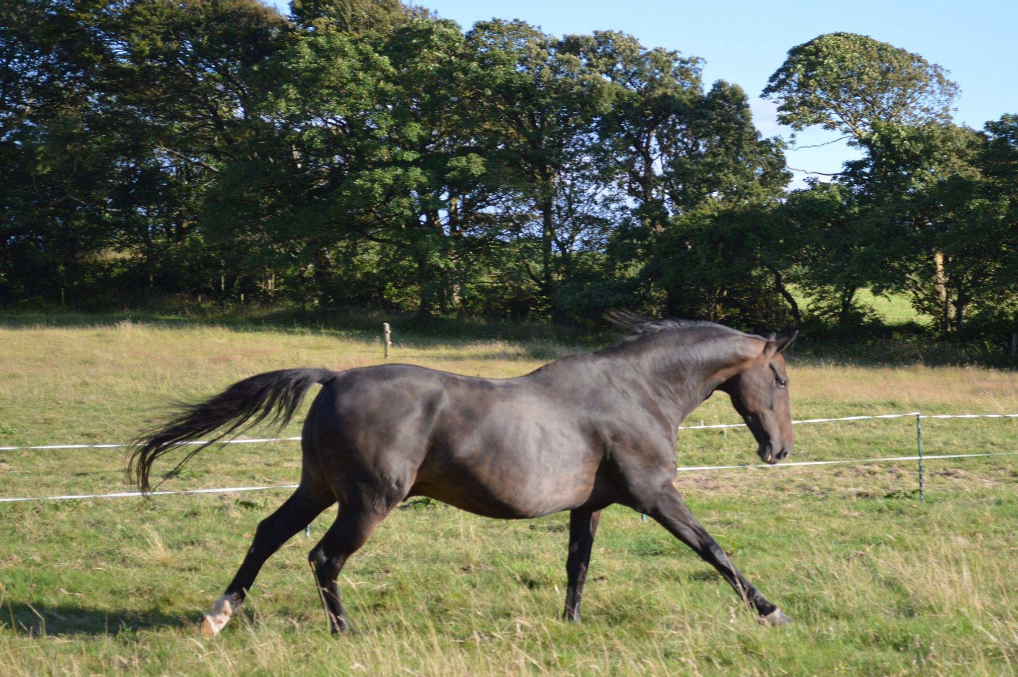ash-rescue-centre-devon-horses-tommy-donate
