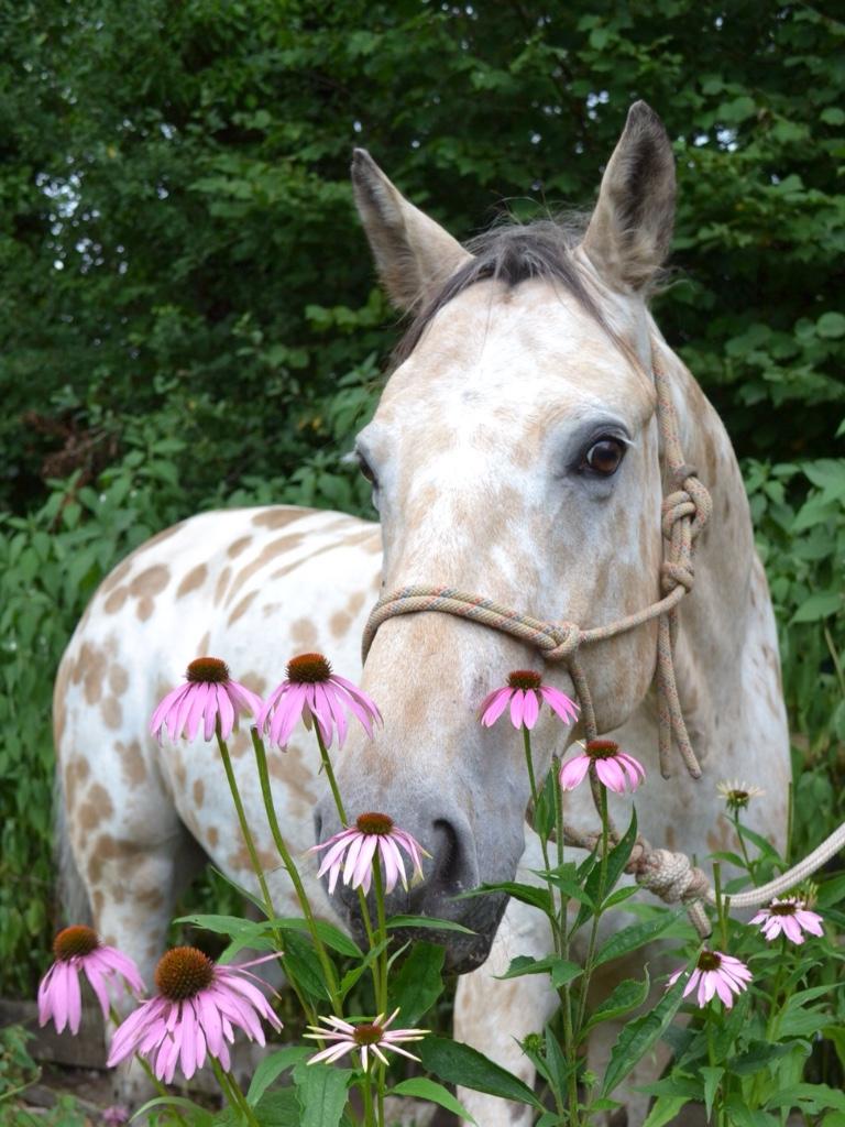 ash-rescue-centre-devon-meadowcine-horses-1