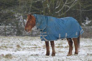 ash-recscue-centre-blog-snow