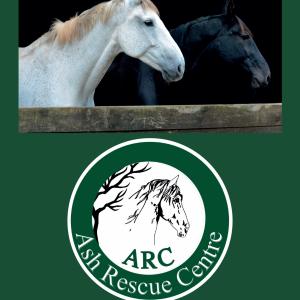 horse-charity-calendar-2020